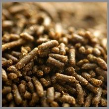 alga pellets